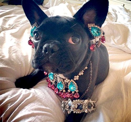 Lady Gaga'nın köpeği